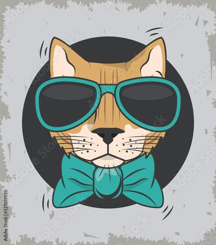 zabawny-kot-w-okularach-w-fajnym-stylu