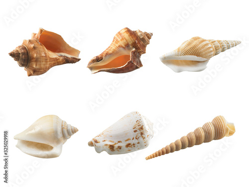 Papel de parede Empty seashell isolated on white background