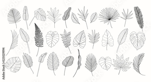 Obraz Line art tropical leaves set. Exotic leaves isolated on white background. Hand drawn floral clipart. Botanical illustration. Banana leaf drawing, monstera leaf. Trendy tropical line drawings. - fototapety do salonu