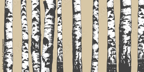 .Birch Grove. Vector background. Hand drawn vector illustration in sketch style. Wallpaper Mural