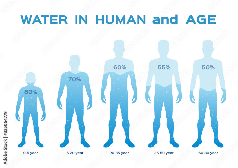 Fototapeta water level  level,in the human body and age vector / infographic