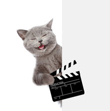 Hapy Cat Holds Clapper Board For Making Video Cinema Behind White Banner. Isolated On White Background