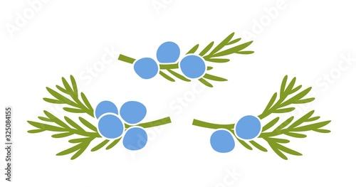 Foto Juniper berries logo