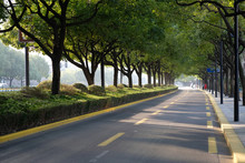 Empty Road Under Green Trees S...