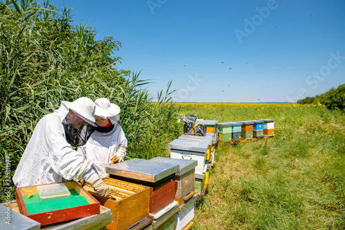 Photo Beekeepers working in a summer