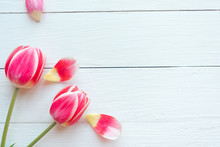 Two Red Tulips On White Wooden Background. Easter, Mother's Day Or Women's Day Greeting Card. Copy Space For The Text