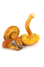 Xerocomus Subtomentosus (brown And Yellow Bolet, Boring Brown Bolete, Yellow-cracked Bolete, Suede Bolete)