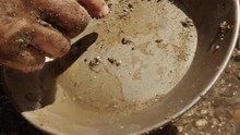 A Gold Miner Sifts Through His...