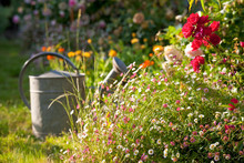 Petit Jardin Fleuri Au Printem...