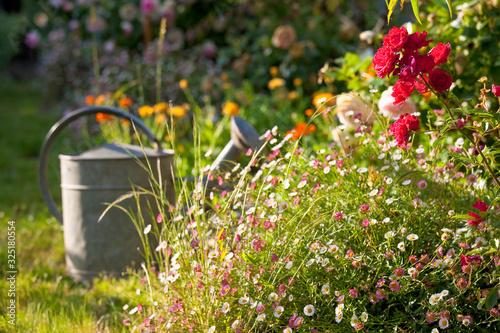Fototapeta Petit jardin fleuri au printemps et arrosoir. obraz
