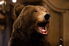 Brown Bear, Bear In House Of M...