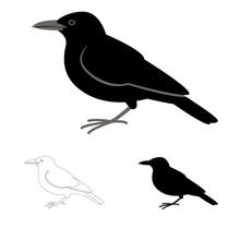 Crow Bird, Flat Style Black Silhouette, Lining Draw