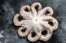 Fresh Raw Octopus, Organic Sea...