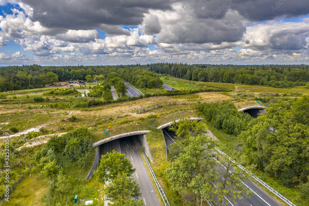 Fototapeta Ecoduct wildlife crossing