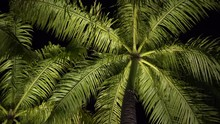 View Of Green Palm Leaves Whic...