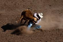Rodeo Cattle Steer Wrestling