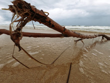 A Stick Washed Up On The Beach