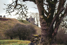 Castle On Hill Framed By Tree