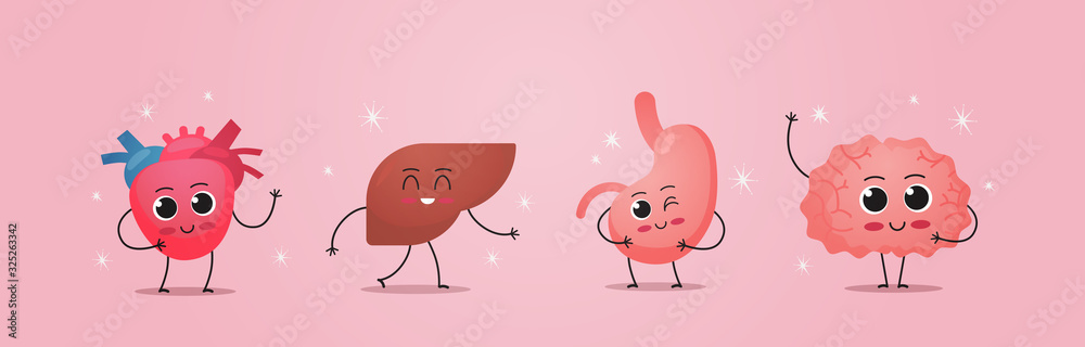 Fototapeta funny anatomical mascot heart liver stomach brain characters cute human body internal organs anatomy healthcare medical concept horizontal vector illustration