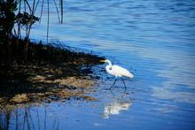 Florida Palm Harbor Beach Seag...