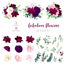 Purple Garden Rose, Burgundy Red Orchid Big Vector Collection