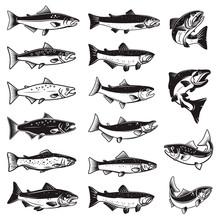 Set Of Illustrations Of Salmon...