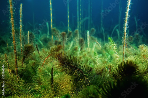 night underwater landscape / diving at night in fresh water, green algae, clear Wallpaper Mural