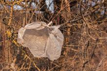 Plastic Bag Littering The Envi...