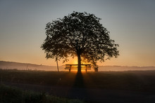 Sun Rising Behind Tree And Bench