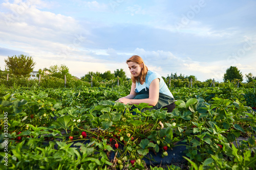 Woman farmer working in a strawberry field Wallpaper Mural