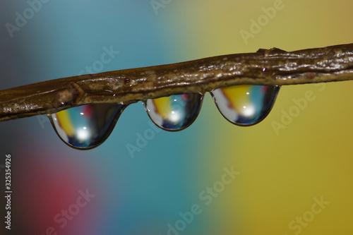 Krople wody na gałęzi krzewu na kolorowym tle macro