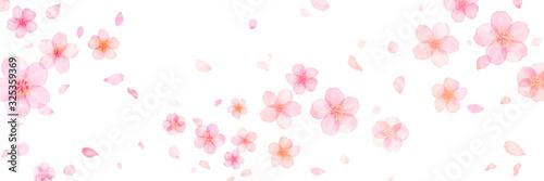 桜 花びら 春 花 水彩   - 325359369