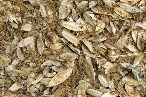 Gold leaf background Tapéta, Fotótapéta