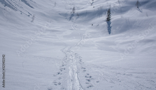 Photo Backcountry ski tracks