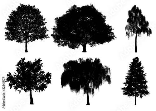 Beautiful collection tree silhouettes and cutting on a white background with clipping path.