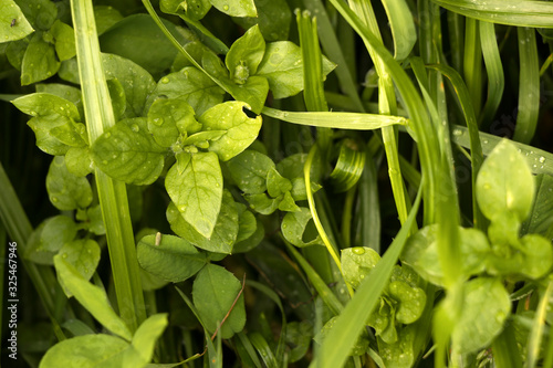Fotografia, Obraz Top view of overgrown yard and garden. Weeds, plants, grass