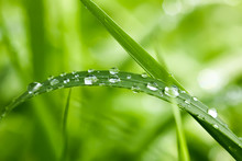 Green Wet Grass In Water Drops...