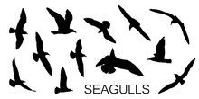 Seagull Silhouettes In Black, ...