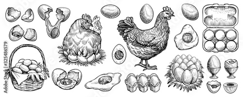 Photo Chicken eggs and farm hen hand drawn vector