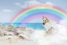 Angel Dog Over Rainbow Bridge