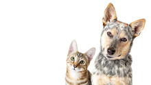Cute Cat And Dog Together Tilt...