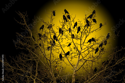 Fotomural crows are sitting on a tree at the beginning of the ragnarok