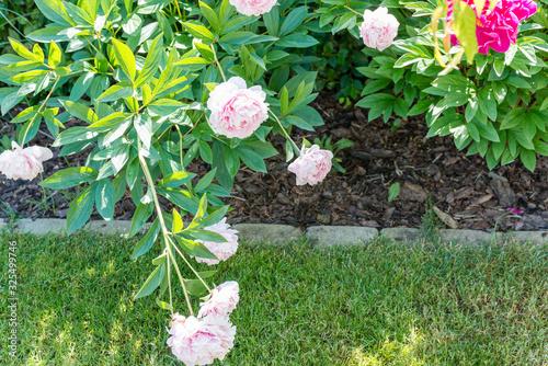 Obraz Ogród w czerwcowy słoneczny dzień - fototapety do salonu