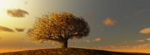 Lonely Tree In A Cultivated Fi...