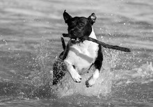 Black And White Photo Of A Run...