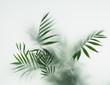 Leinwandbild Motiv palm in fog