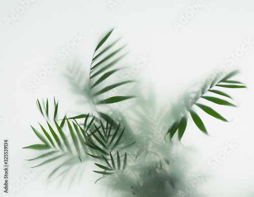Obraz palm in fog - fototapety do salonu