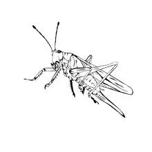 Sketch Design Of Illustration Grasshopper