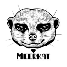 Meerkat Head Sketch. Stylish Image For Printing On All Surfaces