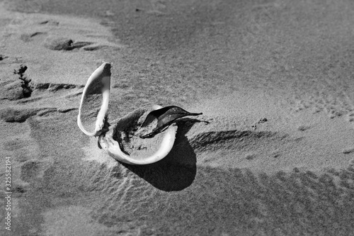 Concha - Natureza morta Slika na platnu
